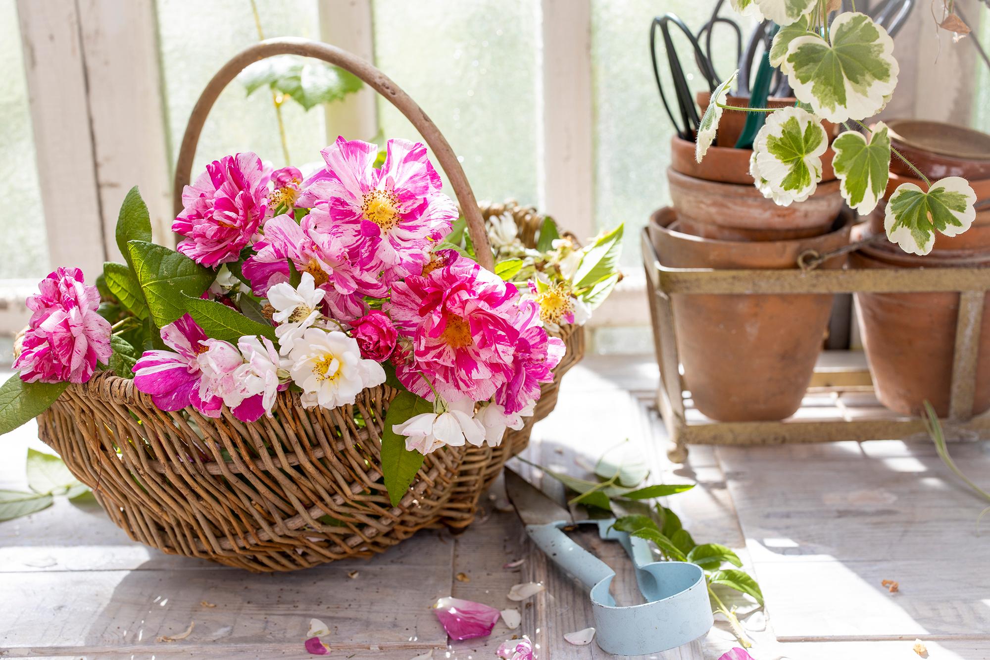Rosa och vita rosor i en korg