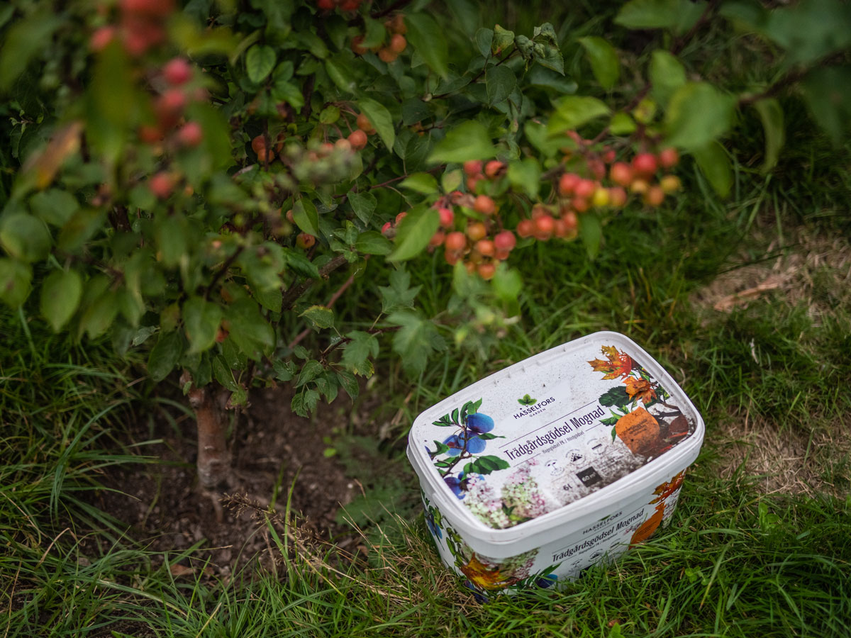 Hink med Trädgårdsgödsel Mognad under äppelträd.